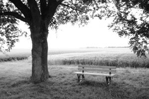bench-and-tree-1-1221201-m