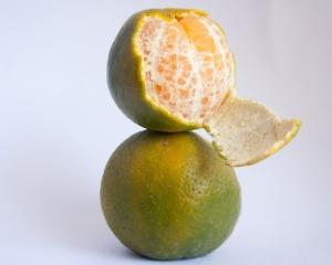 orange-390673_1280